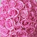 Růže Aqua v kloboukové krabici Grand Pink