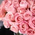 25 růžových růží