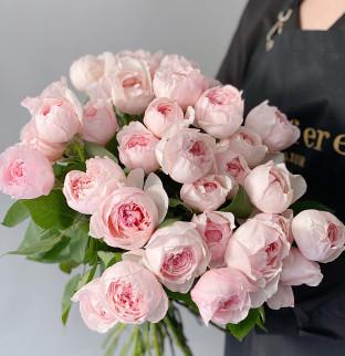 Pivoňkové růže Peony Pink