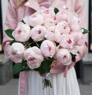 Peony roses Peony Pink