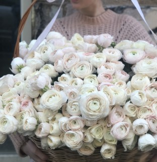 Basket of ranunculus