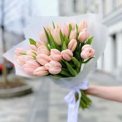 Lososové tulipány