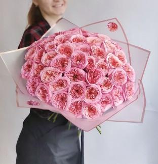 Pivoňkové růže Pink Expression