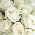 Bílé růže v kloboukové krabici Grand