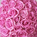 Balíček: Ruže Aqua+makronky+Martini