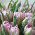 Tulipány v kloboukové krabici Pink