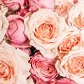 Trsové růže v kloboukové krabici Demi