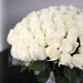 101 bílých růží