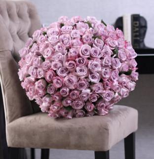 101 violet roses