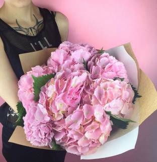 Hortenzie růžové