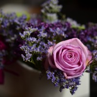 How to care for fresh flowers